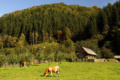 Góry Ţibleş – Rumunia