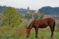 Kościół warowny w Saschiz – Siedmiogród