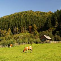 Góry Ţibleş