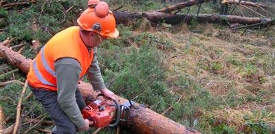 Trwa usuwanie szkód od okiści w lasach
